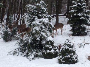 "Oh deer....these cute little guys stopped by my backyard for a ""tree""-t.....they're just trying to have a little ""fawn"""