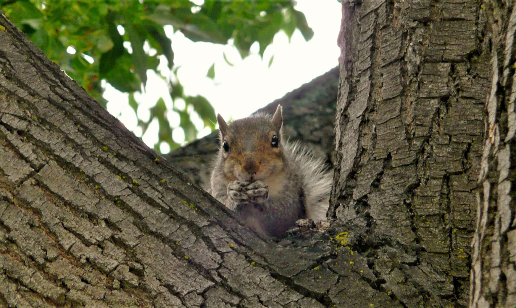 """It's Fall planting time. Let's go nuts and throw """"cashew"""" to the wind"""