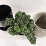 A pot inside a pot
