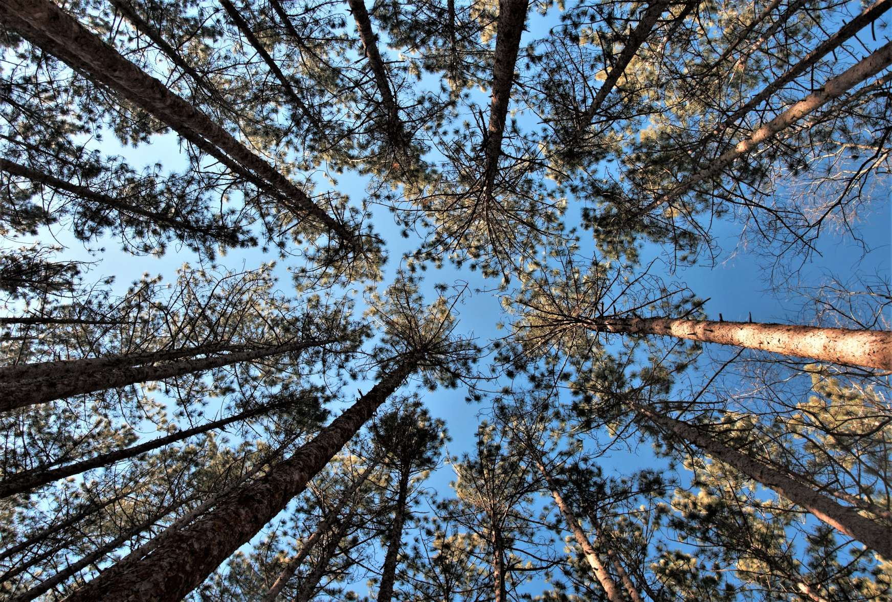 """Trees do """"social distancing"""" too"""