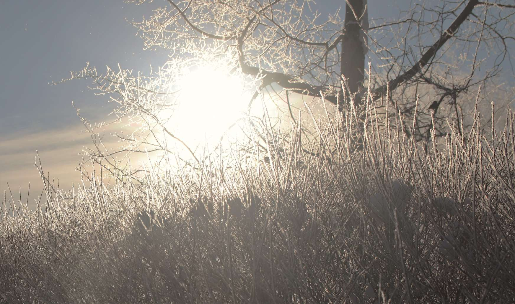 Hoar Frost. Frosty morning on February 11, 2021. Can you spot the bird singing in the tree?