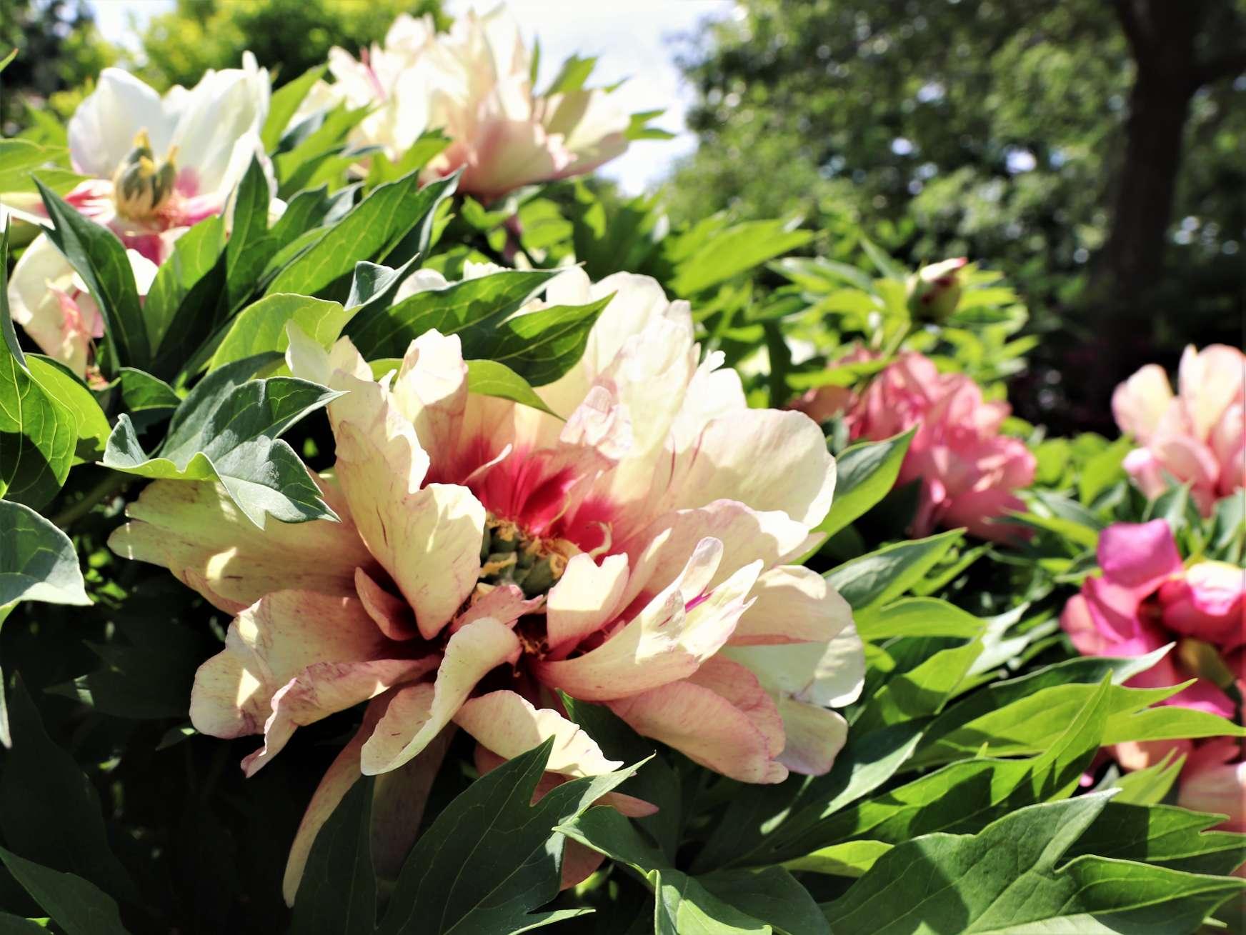 June Bloom Inspiration